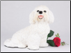 Bichon Frise Dog Figurine Garden Pet  Urn