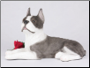 Boston Terrier Dog Figurine Garden Pet Urn