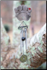 Pawprints Memorial Wind Chimes Sympathy Gift