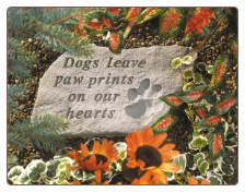 Garden Accent Rock - 'Dogs Leave Paw . . . . . . .'